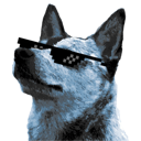Cynolycus logo, a blue heeler with totally sick shades.